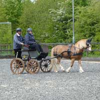 BDS Dorset and S Wilts Dressage and Cones Competition 2019